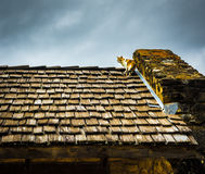A Cat Climbs a Shake Shingle Roof Stock Photos