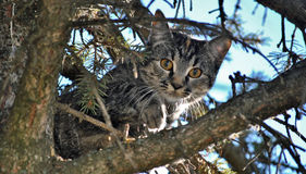 Cat climbs in a tree Royalty Free Stock Photography