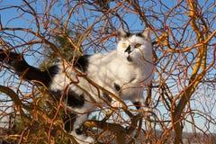 Cat climbs up a tree Stock Photos