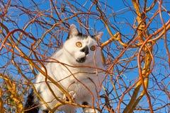 Cat climbs up a tree Royalty Free Stock Photo