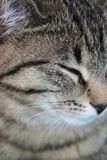 Cat close-up Stock Photography