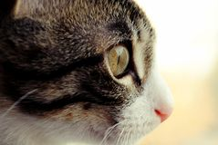 Cat close-up royalty free stock photography