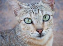 Cat  Close up Stock Image