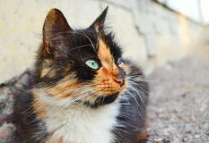 Cat, close up. Red cat outdoor close up Royalty Free Stock Image
