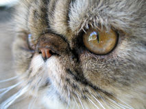 Cat close up Stock Photos