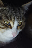 Cat close up in the dark. Royalty Free Stock Image