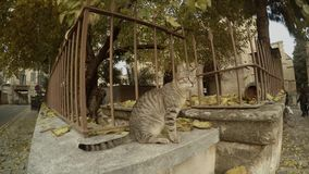 Cat Close Up on Fence of Selimiye Mosque in Fallen Leaves stock footage