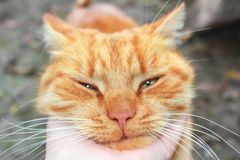 Cat close-up. Hand stroking a cat royalty free stock images