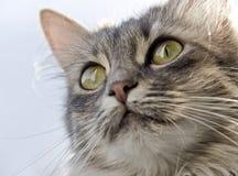 Cat. Close-up head of cat Stock Image