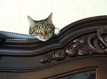 Cat close up hiding on a cupboard looking at viewer with space for advertising, artistic photo of playful kitten Royalty Free Stock Images