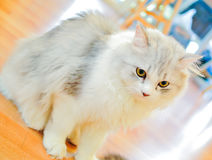 Cat. Close up little white cat Royalty Free Stock Photography