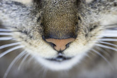 Cat close-up nose seen from from above Stock Image