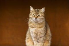 Cat close up photo Stock Photo