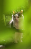 Cat close up photo in the green garden leafs Stock Image