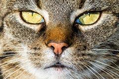 Cat close up Stock Photos