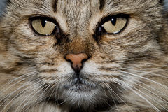 Cat close up portrait Royalty Free Stock Photos