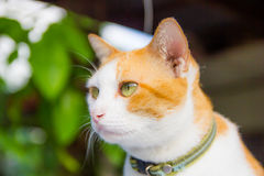 Cat close up Royalty Free Stock Photography