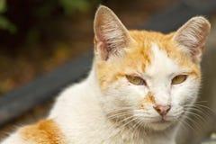 Cat, close-up shot. Stock Image