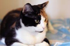 Cat close up shot Royalty Free Stock Photos