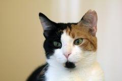 Cat close up shot Stock Photos