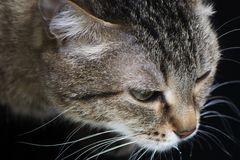 Cat close-up side view royalty free stock photography