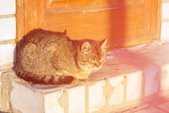 Cat close-up in sun rests on old road. concept of emotion is arr stock photo