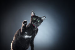 Cat Royalty Free Stock Photos