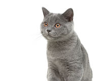 Cat close-up on white background Stock Images