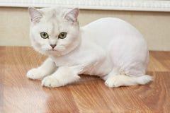 Cat close up. Stock Image