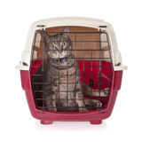 Cat closed inside pet carrier Stock Photo