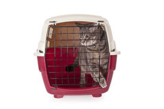 Cat closed inside pet carrier Stock Photos