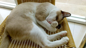 Cat closes eyes. This cat wants to sleep in the afternoon, but it is too bright to sleep Stock Photo