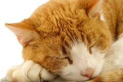 Cat closeup. A closeup of a sleeping red cat Stock Image