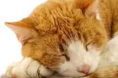 Cat closeup. A closeup of a sleeping red cat Stock Image