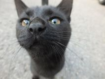 Cat. Closeup of beautiful black cat stock photography