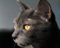 Cat in closeup Stock Photos