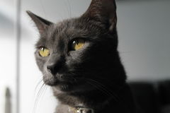 Cat in closeup Royalty Free Stock Photography