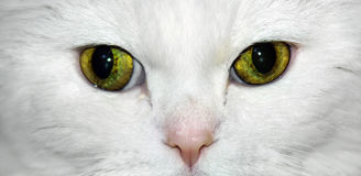 Cat Closeup Stock Photo