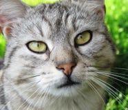 Cat closeup face portrait Stock Image