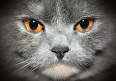 Cat closeup portrait Stock Photos