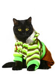 Cat in a clothes. royalty free stock photos