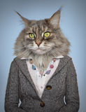 Cat in clothes. On blue Royalty Free Stock Images