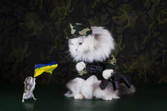 Cat clothes soldiers Royalty Free Stock Photography