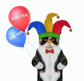 Cat clown with two balloons
