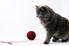 Cat and clue of yarn on white background Royalty Free Stock Images