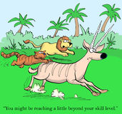 Cat is coached by lion in hunting gazelle. You might be reaching a little beyond your skill level Stock Photos