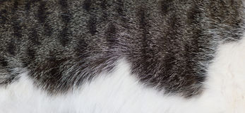 Cat Coat Imagem de Stock