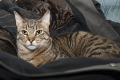 Cat in the Coat Royalty Free Stock Photography