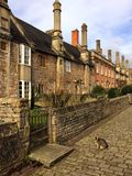 Cat and cobbles on vicars close, Wells. A cat on the cobbled street that leads down to the cathedral  at Wells Stock Image