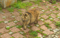 Cat on cobblestone Stock Photo